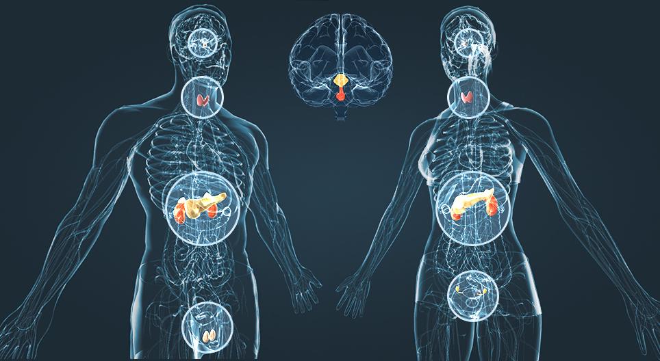 Desequilíbrio hormonal e doenças cardiovasculares